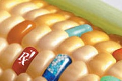 Управление по санитарному надзору за качеством пищевых продуктов США уверено в безопасности ГМО